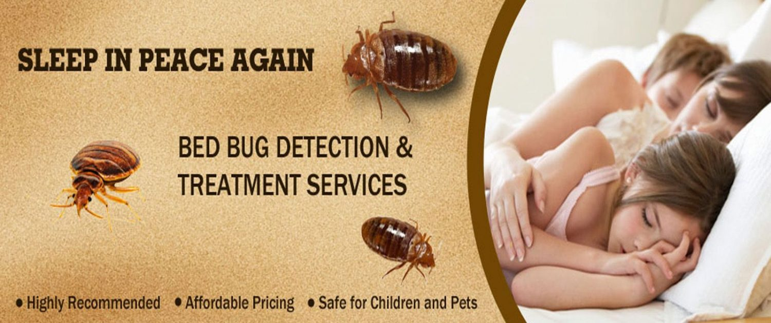 Bed Bug Exterminator Best Choice Pest Control Nyc